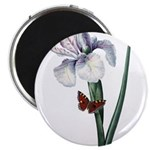 Iris with Butterfly Magnet