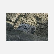 Baby Snow Leopard Peek A Boo Rectangle Magnet