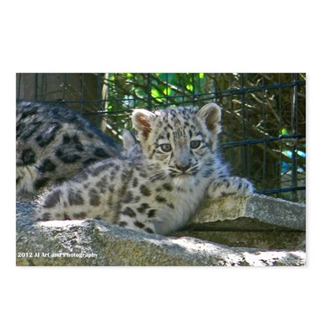 Baby Snow Leopard Postcards (Package of 8)