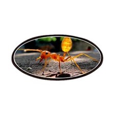 Red Ant Patches