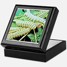Silkworms Keepsake Box