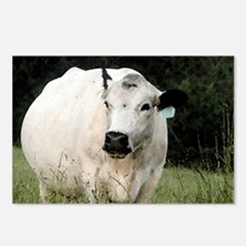 British White Cow - Color #2 Postcards (Package of