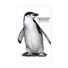 Chinstrap Penguin Decal