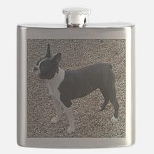 Boston Terrier Pup2 Flask