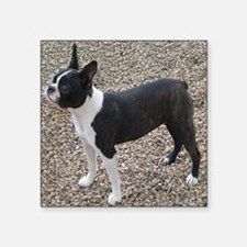 "Boston Terrier Pup2 Square Sticker 3"" x 3"""