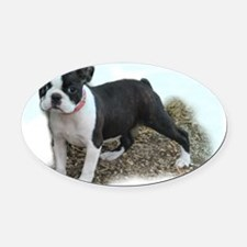 bostonpup1tee.png Oval Car Magnet