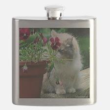 catpansytshirt.png Flask
