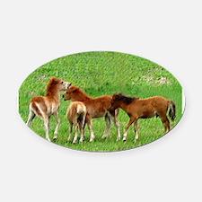 herdLframed print.png Oval Car Magnet