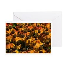 Helenium Flowers Greeting Card