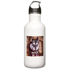 Husky Gazing Up Sports Water Bottle