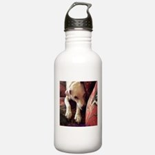 Jack Russell Resting Sports Water Bottle