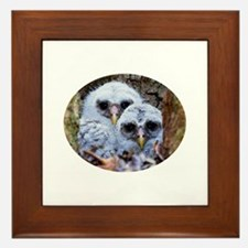 barred owl chicks Framed Tile