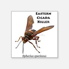 """Cicada Killer Square Sticker 3"""" x 3"""""""