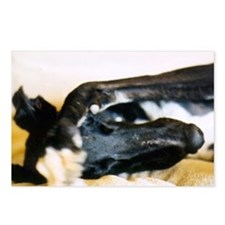 hiding greyhound postcard (8 pk)