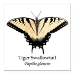 Tiger Swallowtail Square Car Magnet 3