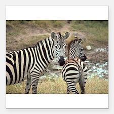 "Zebras Square Car Magnet 3"" x 3"""