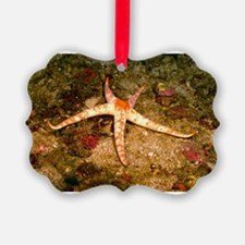 Star Fish Ornament