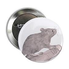 "Baby Rat 2.25"" Button"