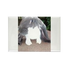 English Lop Bunnie Rectangle Magnet