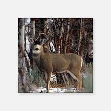 "Buck deer Square Sticker 3"" x 3"""