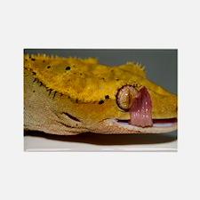 Crested Gecko Lick Rectangle Magnet