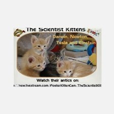 The Scientist Kittens Rectangle Magnet
