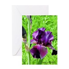 Greeting Card - Indigo Iris