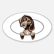 Pointer Peeking Bumper Sticker (Oval)