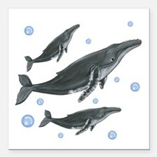 "Humpback Whales Square Car Magnet 3"" x 3"""