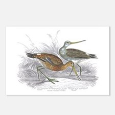 Black Tailed Godwit Postcards (Package of 8)