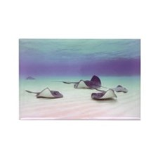 Stingrays - small poster.jpg Rectangle Magnet
