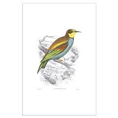 European Bee Eater Bird Posters