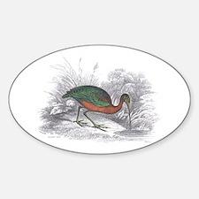 Glossy Ibis Bird Oval Decal