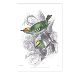 Gold Crest Bird Postcards (Package of 8)