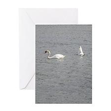 Swans (TAD) Greeting Card