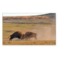 Bulls Clash in Wind Cave National Park Decal