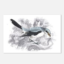 Great Cinereous Shrike Bird Postcards (Package of