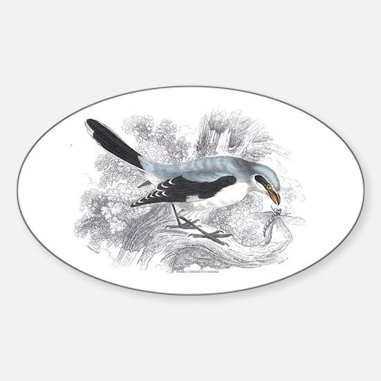Great Cinereous Shrike Bird Oval Decal