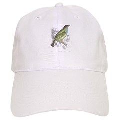 Honey Guide Bird Baseball Cap