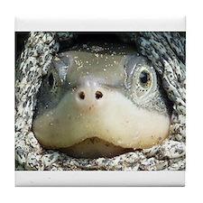 Diamondback Terrapin turtle Tile Coaster