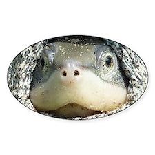 Diamondback Terrapin turtle Decal