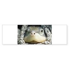 Diamondback Terrapin turtle Bumper Sticker