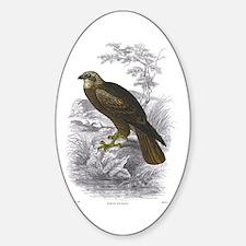 Marsh Harrier Bird Oval Decal