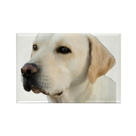 Yellow Lab Head Rectangle Magnet