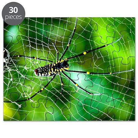 Giant Argiope Spider Puzzle