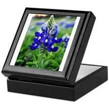 Lonestar Bluebonnet Keepsake Box
