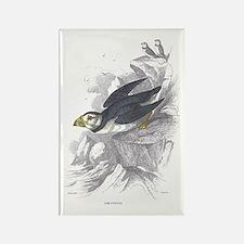 Puffin Bird Rectangle Magnet