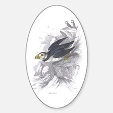 Puffin Bird Oval Decal