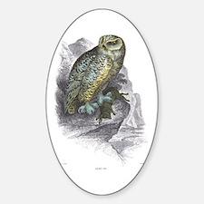 Snowy Owl Bird Oval Decal