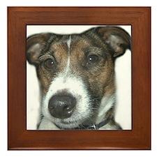 Handsome Jack Russell Terrier Framed Tile